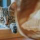 猫を簡単に飼えると思っていませんか?飼い主に絶対に必要な4つの条件とは