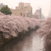 東京でお花見が生半可な物では無かった件について