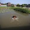 辻川山公園公園の池(兵庫県福崎)