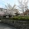 岡本南公園(桜守公園)の笹部桜