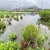 汐入池・イトヨの湧水池(岩手県大槌)