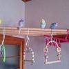 とりちゃんズマンションの 住鳥