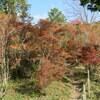 【行ってみた】千葉山ハイキングコースどうだん原の紅葉、駐車場情報など