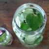 復活!日陰のユキノシタ2~ユキノシタとドクダミで自家製化粧水