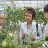 トマト栽培の達人