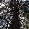 秩父盆地に聳え立つ名峰「武甲山」登山