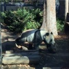 祝! ジャイアントパンダ「シンシン」2頭出産