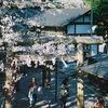 春の鎌倉を撮り歩く-フィルム編-