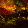 京都紅葉狩り:名所の高台寺・圓徳院ライトアップに行ってきたぞ。