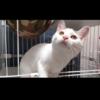 「淡い色合いのネコ」パステルミケ