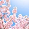 ◎どうもしない、春です。