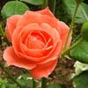 今日の庭 前庭の花いろいろ