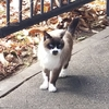 ◆山猫達(2017/12/14~16)