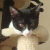 今日の黒猫モモ&白黒猫ナナの動画ー542
