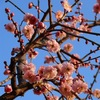 春の訪れ 2011