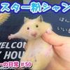 【ハムスター 動画】ハムスター🐹粉で洗えるハム専用シャンプー!石鹸のいい香り~♪#50