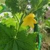 7月3日(火)  暑くてたまらない方々へ…1つ花、集めました  in  盛岡