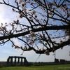 ローマの春の草花 - 1