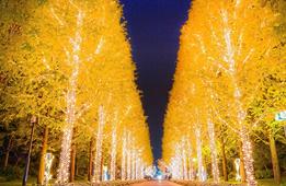 インスタ映え間違いなし!京都市内のキラキラ★イルミネーション4選