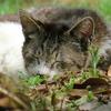 6月12日 千葉県の松山庭園美術館の猫さまに会いに行く