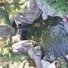 池の濾過槽掃除