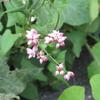 八千草の花の野辺ー2