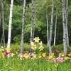 """花粉症は春で終わりだと言ったな…あれは""""嘘""""だ。実は季節は関係ないよ!花粉症ッ"""