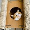 ヨーグルト好き猫のランチタイムルーティン