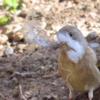 野鳥の癒し効果はスゴイ!近所バードウォッチングで心ほんわか