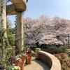 横浜名所桜満開散歩の記・その2