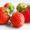 フレッシュなイチゴを使ったカクテルのレシピ7種を紹介します