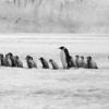 幸福のための不幸についての覚書|好きな動物ランキング 1位ねこ 2位ペンギン 3位ピカチュウ