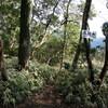 五助山から石切道へのハイキング(その2)五助山