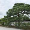 京都観光気分を味わおう(その3):京都御所/御苑