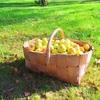 夏の終わりと青いりんご