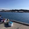 またまた三崎港で釣り