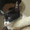今日の黒猫モモ&白黒猫ナナの動画ー549