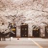 Snapshot ~『桜 2021』 #5