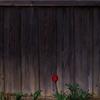 フィルム写真録 『 春を待つ 』