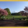 【山梨旅行②】諏訪の森自然公園(富士パインズパーク)でピクニック 富士山と桜を楽しむ芝生広場は最高
