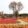 木曽三川公園のチューリップと桜