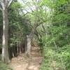 勝俣部長の健康体質作り・・・・高尾山「健康を体感する」(231)
