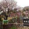 2017年3月10日梅開花状況、岡本梅林公園に再訪してきたぞ~!!【兵庫県神戸市】