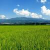 山形も連日35℃を超えて妻の実家で枝豆採り、蔵王の眺め