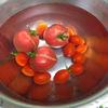 ゴーヤとトマトの観察日記【16週目】/ トマト終了宣言