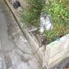 ブロック塀の解体とフェンスに取替事例2/3フェンス取付