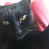 今日の黒猫モモ&白黒猫ナナの動画ー1019
