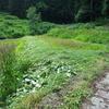 【農作業のコツ】腰痛防止に。草刈り機に手を添えるとバランスがよくなることを発見。