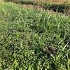 畑の草と生き物と野菜たち。