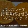 400食目「ポンカンって1ヶ月熟成させるって知ってた?」鹿児島県いちき串木野市で熟成ポンカン1月末出荷開始
